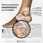 Investigadores de la UB describen una nueva estructura anatómica en el tobillo – UB