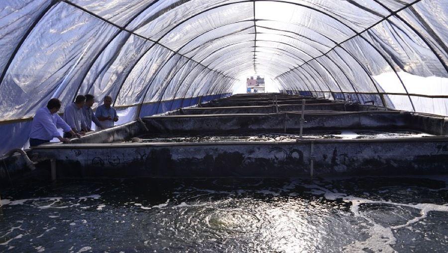 Diretor-superintendente do Sebrae RS visita Estação Marinha de Aquacultura - FURG
