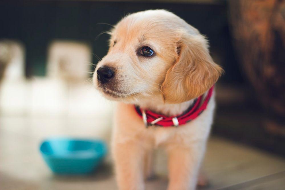Melhor amigo do homem? Docentes da UFF discutem cuidados e maus-tratos de animais