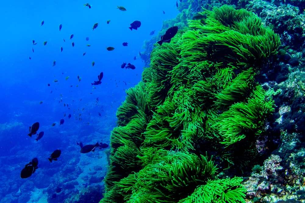 Livro de professores da UFF sobre Ecologia Marinha marca o início da Década da Ciência Oceânica promovida pela ONU