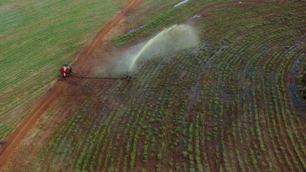 Microalgas encapsuladas ajudam a tratar vinhaça, efluente da indústria de etanol - UFPR