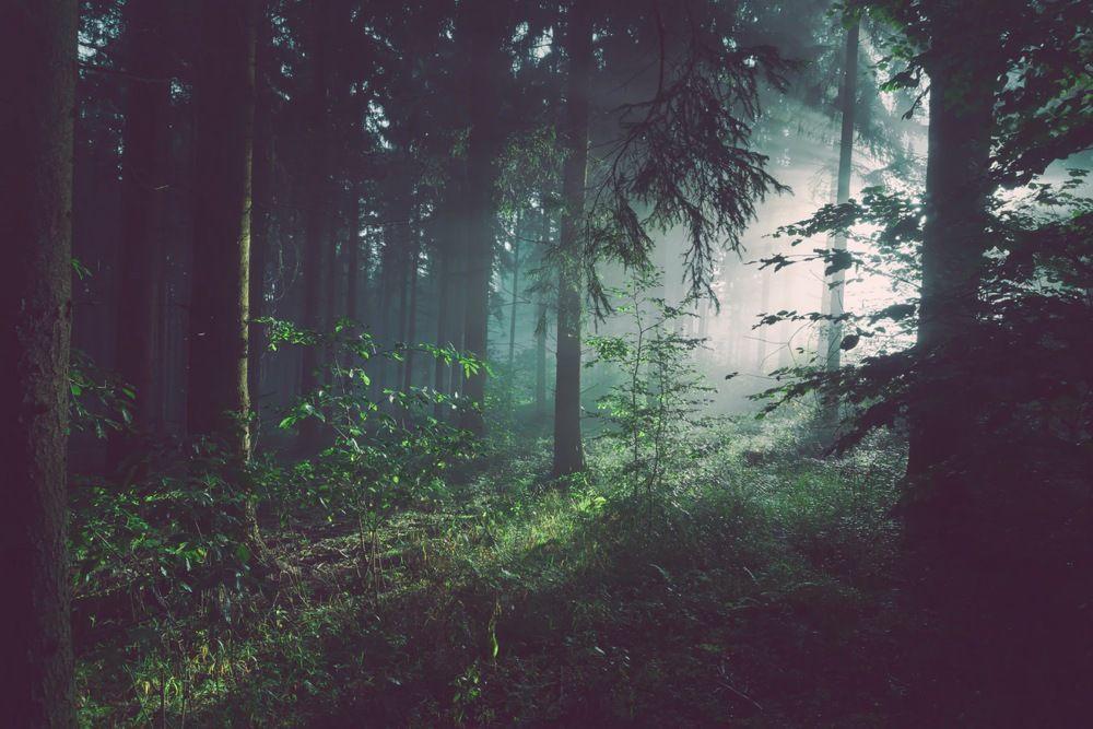 La gestión de los bosques, clave en la lucha contra el cambio climático - UPM