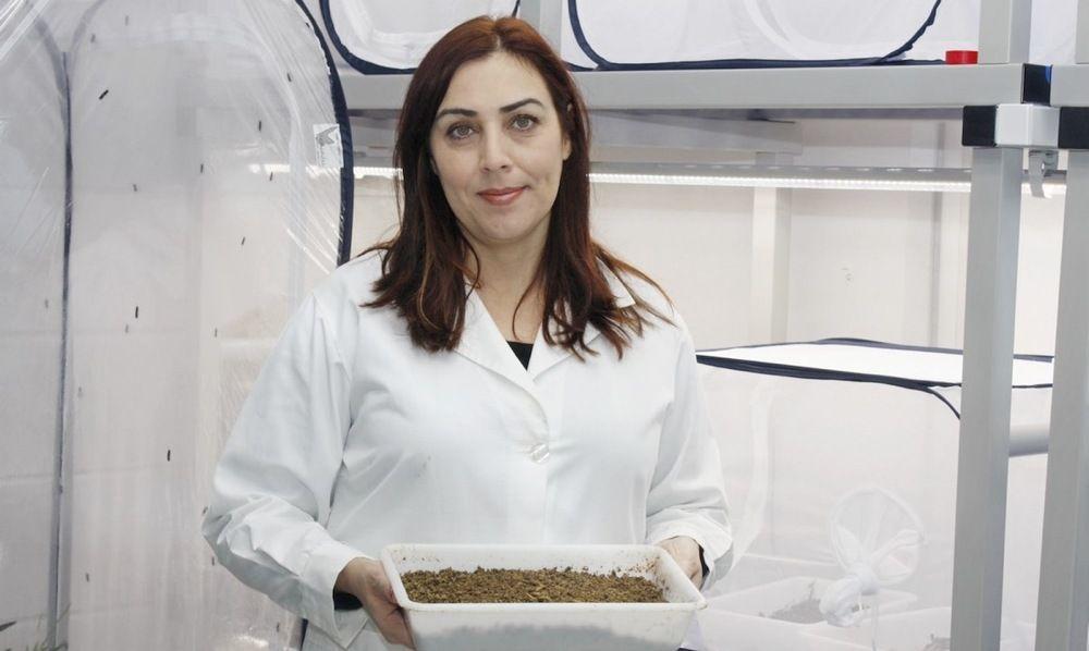 """""""SUShI"""" de insetos para rações de aquacultura desenvolvido na UA"""
