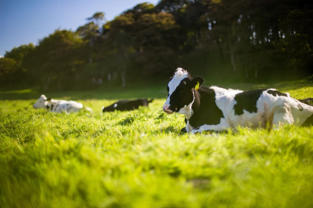 Modelo matemático prevê emissões de metano no gado – UFMT